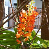Fleurs du jour (37) - Noy et Gilbert en Thaïlande