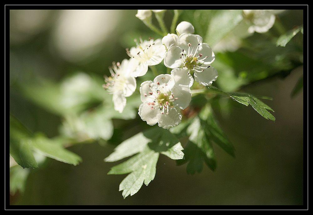 """Z'Album"" : fleurs"