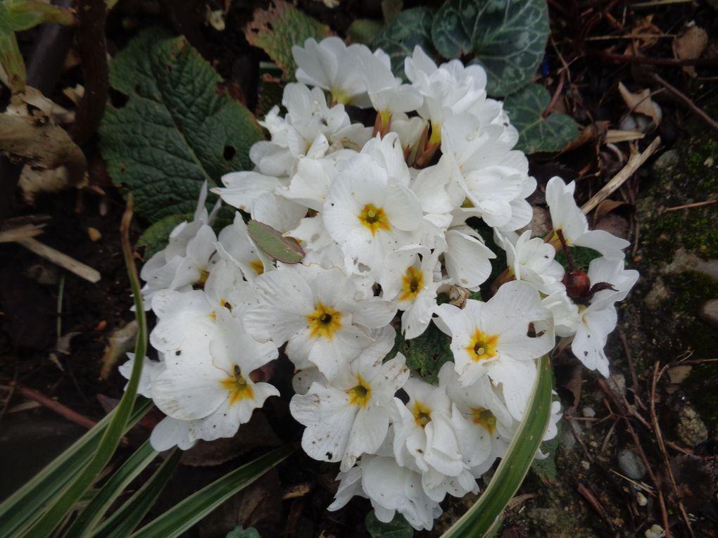 """Mon jardin """"Le Clos fleuri """" en avril 2021"""