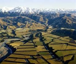 The Canterbury Region and vines