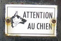 Les chiens du Raincy ont du caractère, lunatiques ou bizarres, leurs maitres n'hésitent pas à le faire savoir.