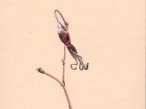 Rosa pendulina - Aquarelle et encre sur papier naturel Clairefontaine 250g