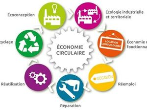 Ecologie individuelle