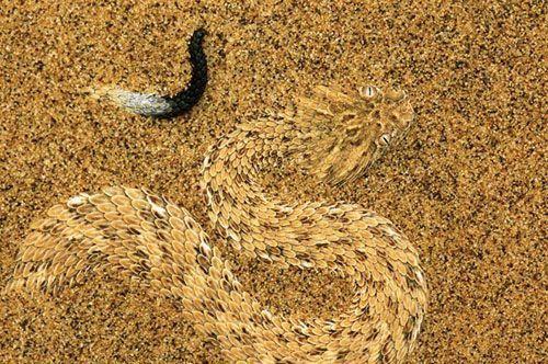 Imágenes del desierto del Kalahari, en África Austral (Botswana, Sudáfrica y Namibia).- El Muni.