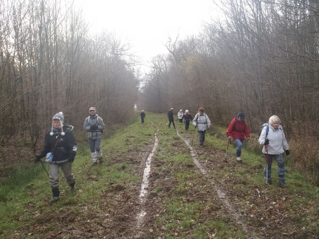 Sortie ½ journée dimanche 7 février 2016 Pontcarré forêt de Ferrières