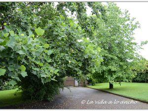 Un impactante reencuentro con el jardín, no había reparado antes en la impresionante espesura de mis árboles