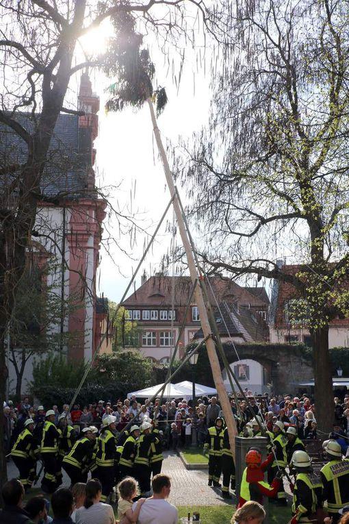 Volksfeststimmung bei der Maibaumaufstellung in Veitshöchheim im überfüllten Rathaushof - Über 800 Besucher verfolgten das Spektakel