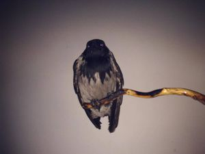 So you rescued a baby bird. Now what?