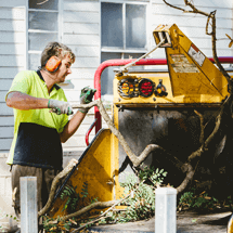 Why Hire Professional Tree Trimming Services in Tarragindi