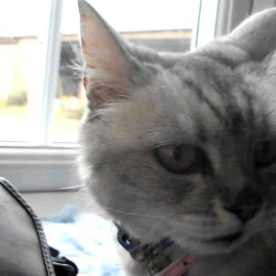 L'instant chat : le ronronnement le plus fort au monde