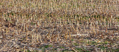 Les tourments de l'agriculteur (Maurice Montégut)