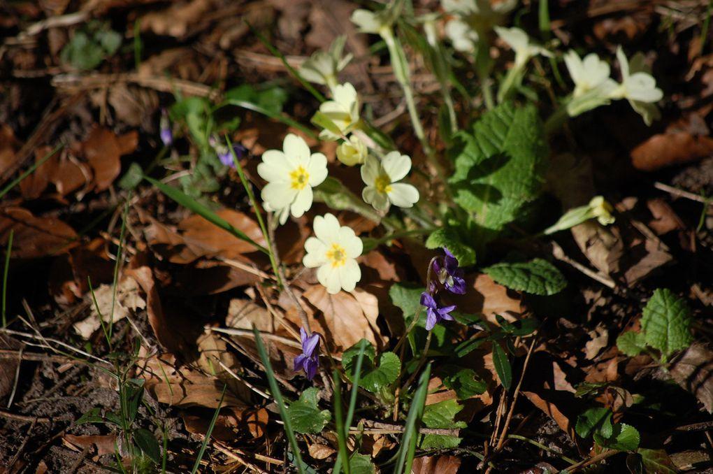 Mercredi 8 avril : Forêt de Saou