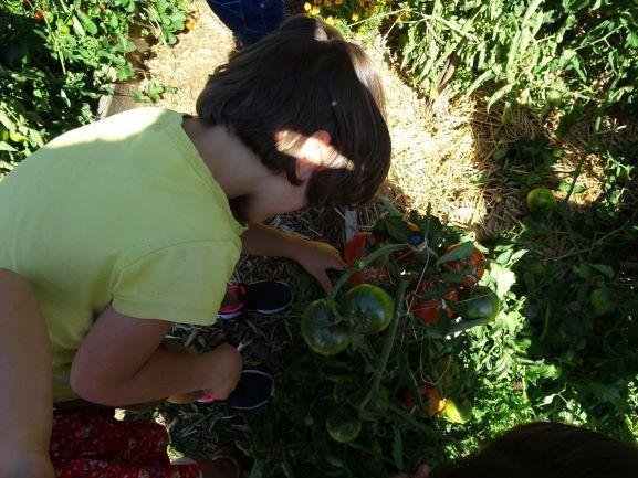Les enfants de l'École Saint-Michel font les récoltes de leur jardin