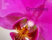 Orchidées chez Rolande Fleurs Narbonne