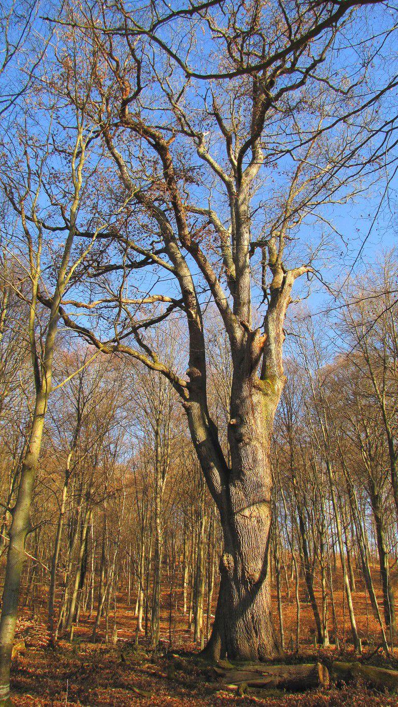 Randonnée en forêt de Compiègne_les Tournantes du Mont Saint-Pierre