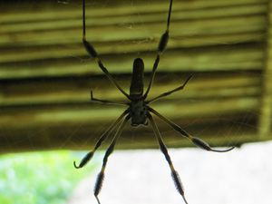 We actually met this spider, I even get my head right into her house...