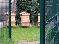 La Gare des Vallées à Colombes fait le buzzzzz .....avec l'installation de ruches