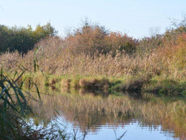 Une belle matinée de novembre le abord du Rhin...