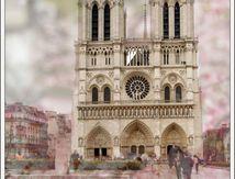 Les magnolias de Notre-Dame de Paris