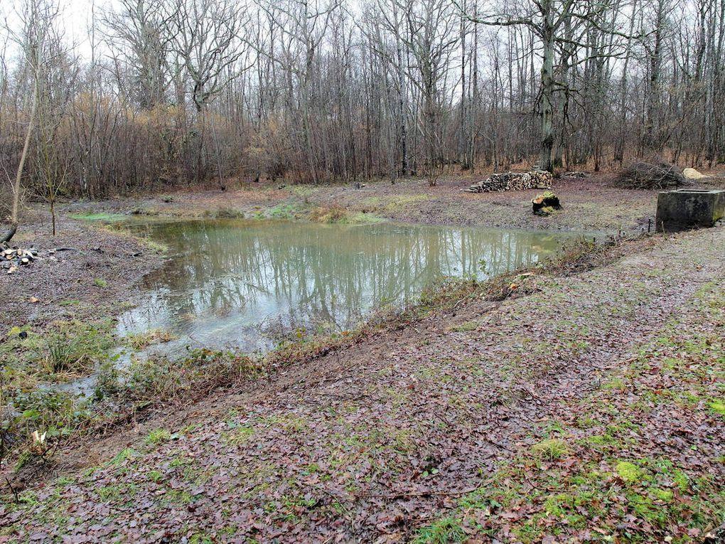Grande toilette du petit étang