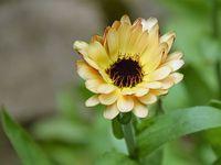 Les soucis et les autres fleurs occupent joliment le sol sous les courges.