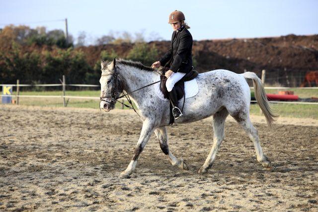 Epreuves de l'après-midi partie 02 concours de dressage au poney club de léguevin le 11 déc 2011