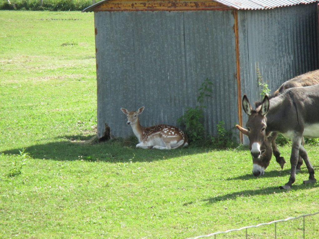 les animaux dans un pré, l'église du Pin, campagne avec vue sur le lac de Charavines, mon campement