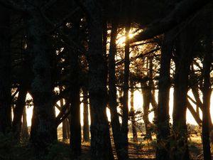 Début de journée en sous bois