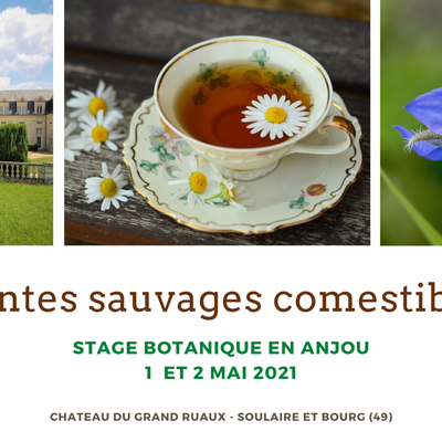 STAGE plantes sauvages comestibles