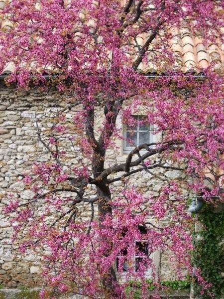 Album - Vaison-la-Romaine