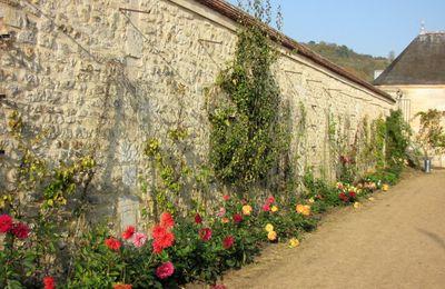 Les dahlias du Potager-fruitier, château de La Roche-Guyon