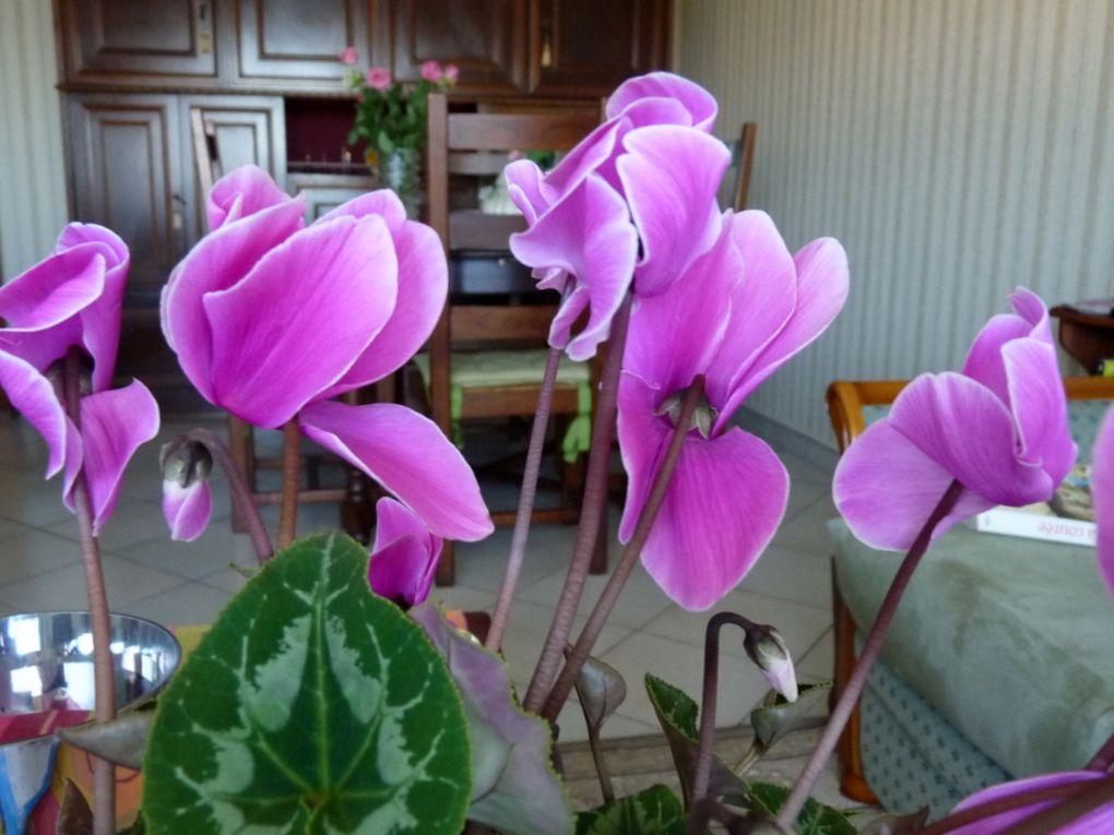 Fleurs 129