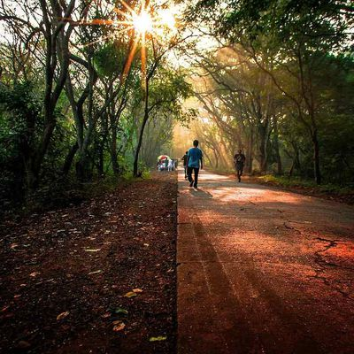 Sanjay Gandhi National Park: An Escapade into Nature and Wildlife