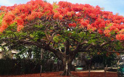 diaporama: Nouvelle Calédonie