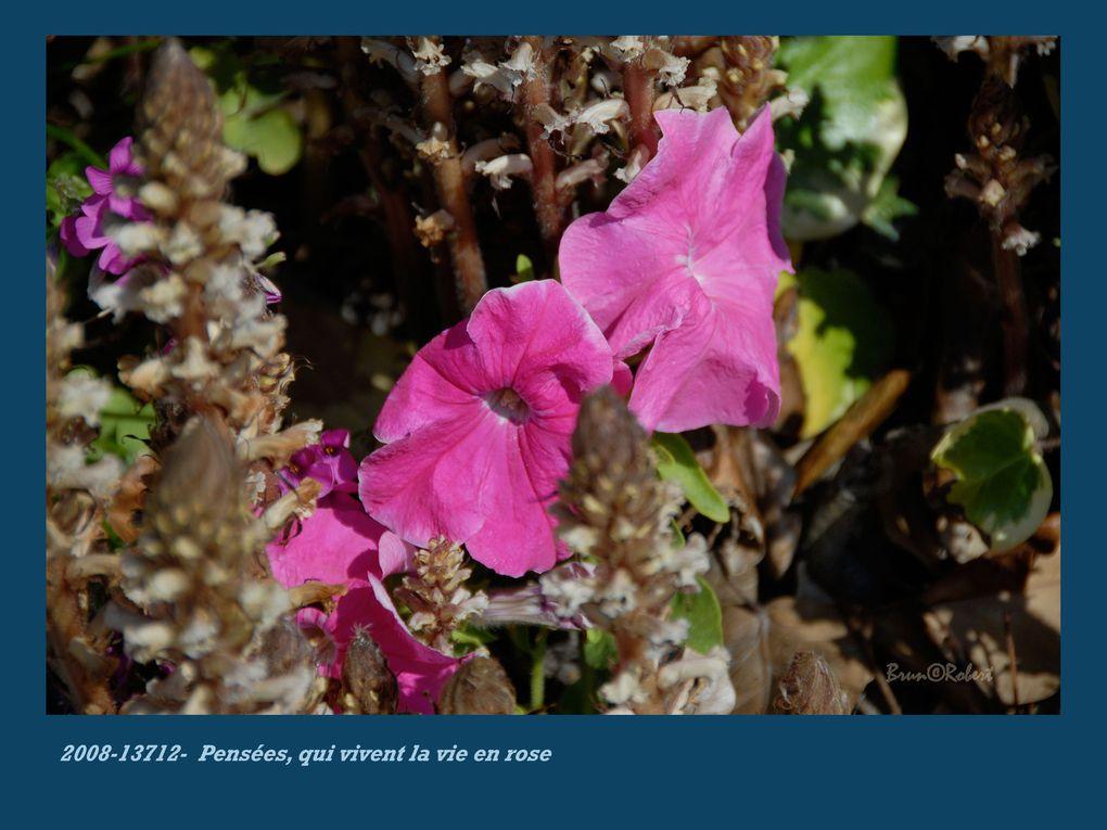 raz-de-marée de fleurs
