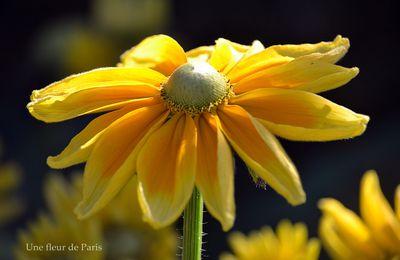 Du soleil, des fleurs et des oiseaux ...