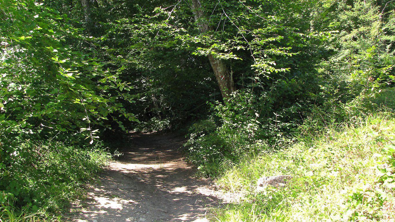carrefour_GR11_Sentier (parcelle 1070)