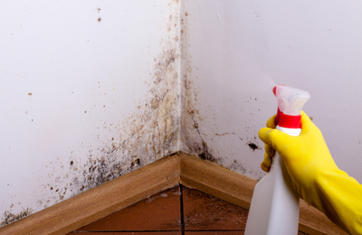 How Does Mold Removal Work?