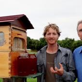 Du miel directement au robinet, quand la ruche se fait distributeur. - Daniel JAGLINE djexreveur