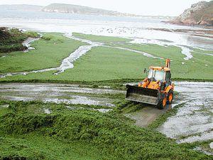 Algues vertes, eau polluée voilà ce qui attend le littoral vendéen