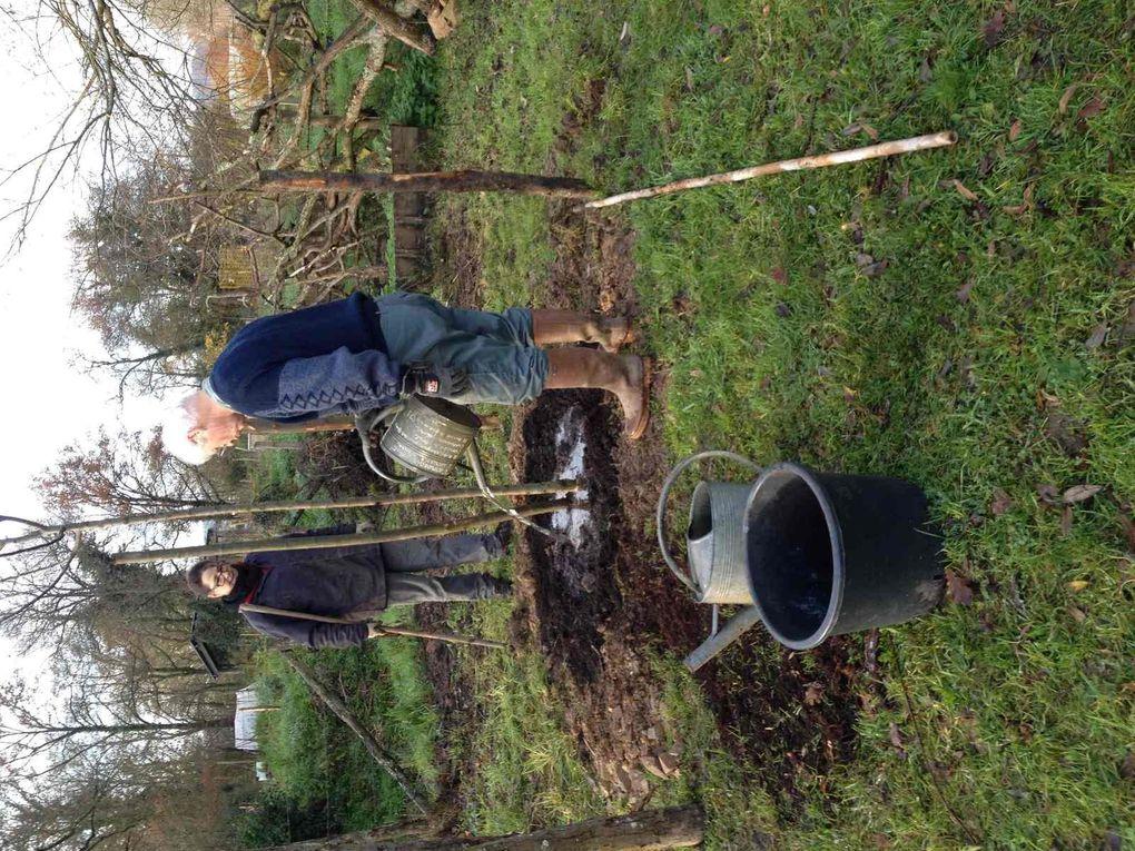 Plantation des porte-greffes réalisée avec l'aide de Pierre Danilo de la Société d'Horticulture de Redon