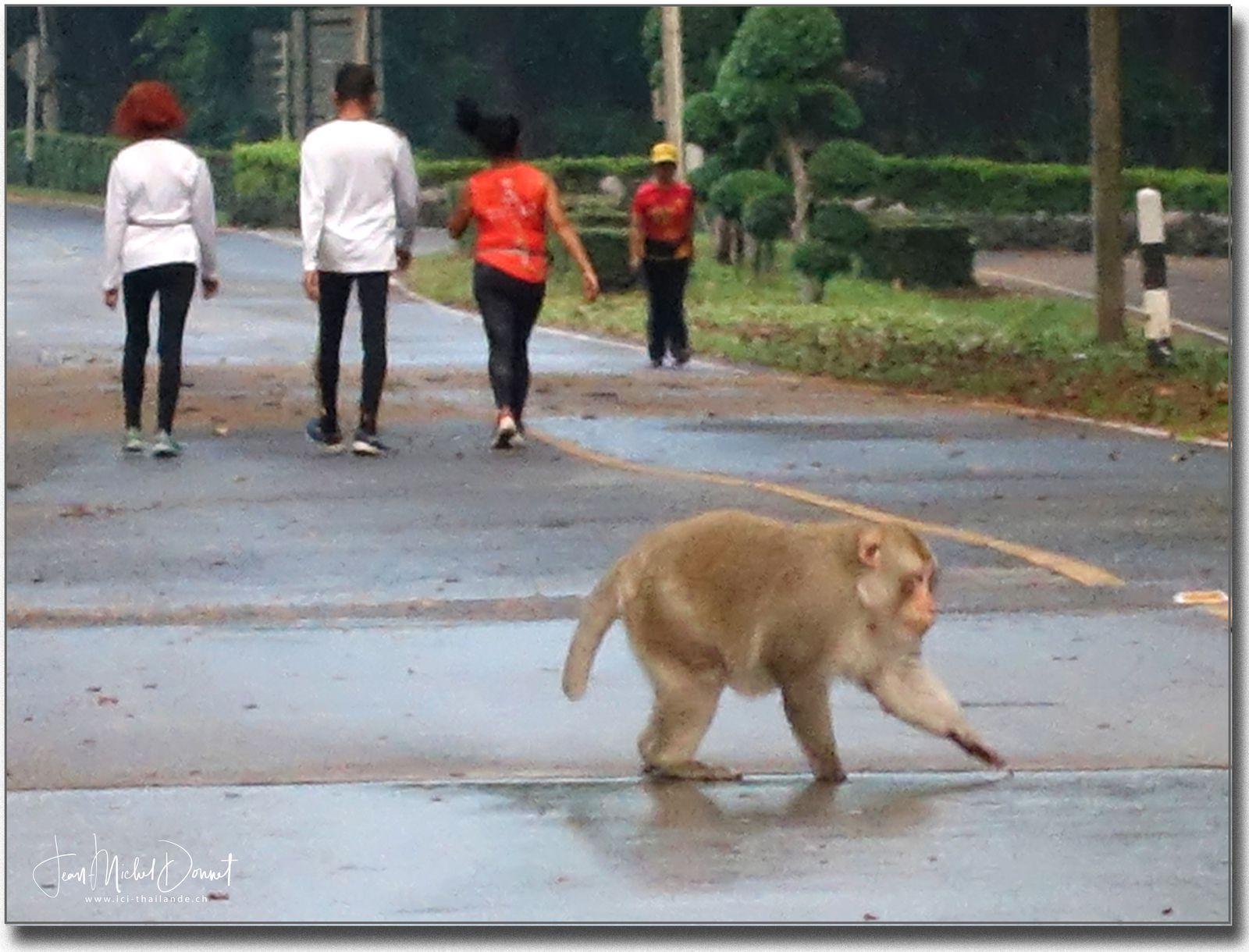 Que de monde lors de notre marche... (Thaïlande)