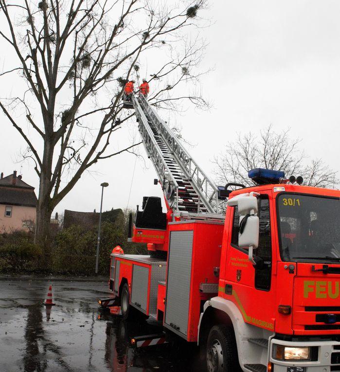 Feuerwehr erntete  mit der Drehleiter Misteln zum Verkauf bei der Altortweihnacht