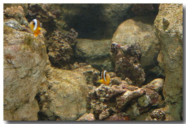 """<p><strong>CineAqua, l'aquarium du Trocadéro<br />Préouverture - Juin 2006<br /><em><a href=""""http://www.maitrepo.com/article-2938737-6.html"""" target=""""_blank"""">-> Lire l'article associé</a><br /></em></strong></p>"""