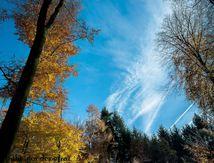 Les feuilles mortes sous les arbres de Normandie