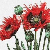 Poppies photo stitch free embroidery design 22