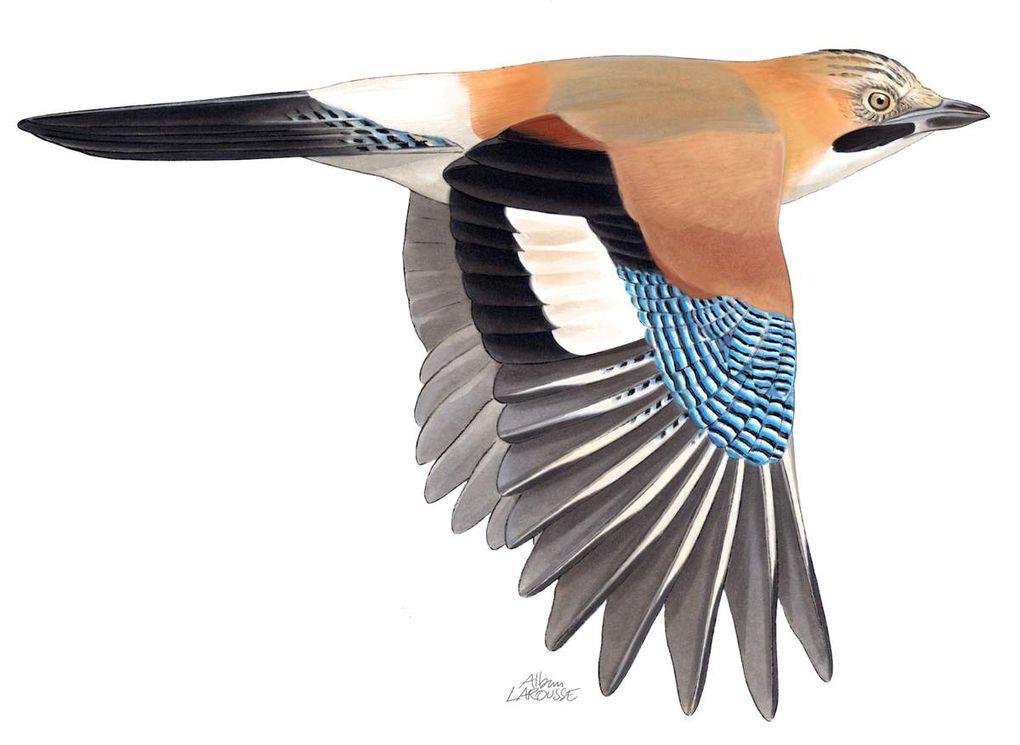 Quand les oiseaux font spectacle