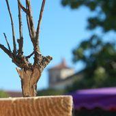 De l'antant à maintenant la première tranche de bois de plante - l'exposition de l'entre-fêtes