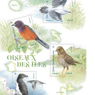 La Grive à pieds jaunes, choisie par la Poste parmi les 4 oiseaux menacés des îles françaises !