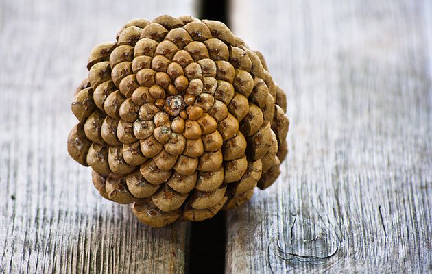 valscrapbook:  Pine Cone on de Bench by Orbmiser on Flickr.